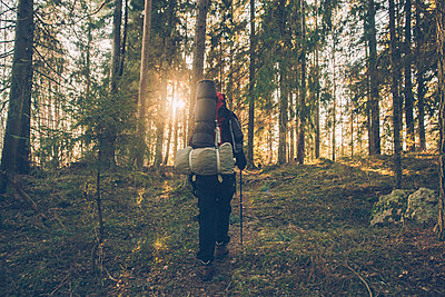 Sweden, Sodermanland, backpacker hiking in remote forest in backlight - p300m2005590 by Gustafsson