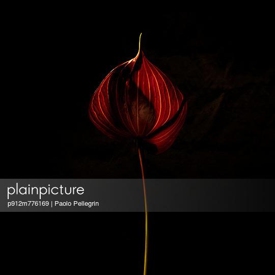 p912m776169 von Paolo Pellegrin
