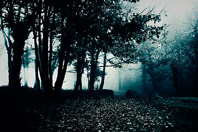 Path leading to dark and misty woods - p1047m2233826 by Sally Mundy