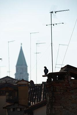 Über den Dächern von Venedig II - p1493m1584745 von Alexander Mertsch