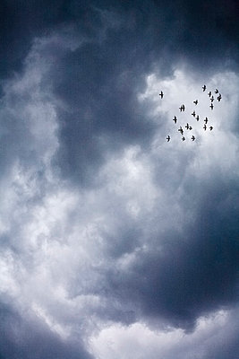 Sturm kommt auf - p975m858287 von Hayden Verry