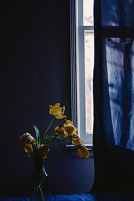 Tulips in Soft Window Light - p1262m1082809 by Maryanne Gobble