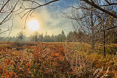 Spiderweb covered in dew at early morning, Algonquin Park; Ontario, Canada - p442m904864f by Robert Postma