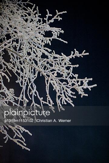 Gefrorene Äste eines Baumes  - p1319m1153102 von Christian A. Werner