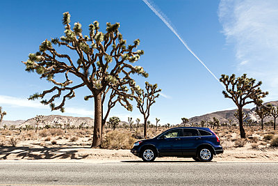 Joshua Tree National Park - p1094m971554 by Patrick Strattner
