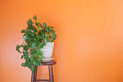 Pflanze vor orangener Wand - p4630290 von Yo Oura