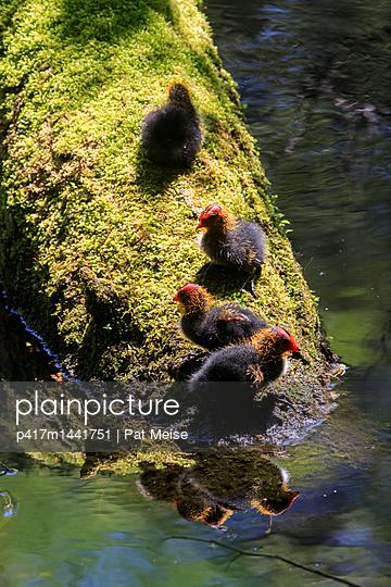 Punker - p417m1441751 von Pat Meise