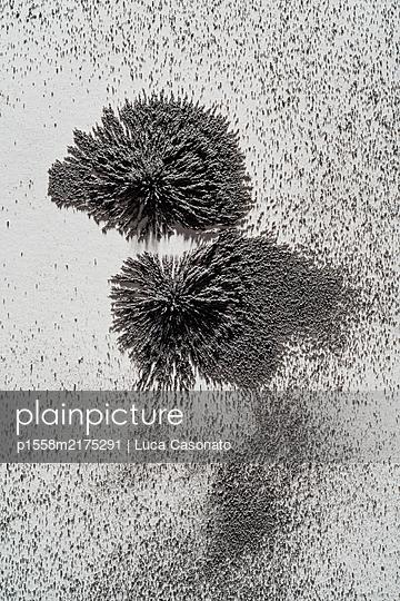Attraction - p1558m2175291 by Luca Casonato