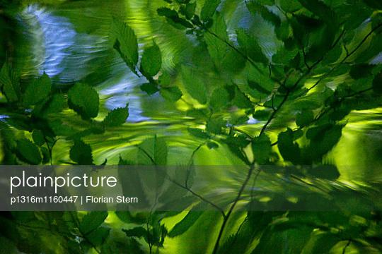 Bäume spiegeln sich in einem See, Schlosspark Nymphenburg, München, Bayern, Deutschland - p1316m1160447 von Florian Stern