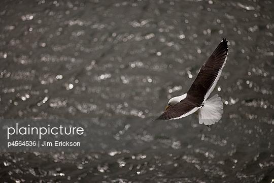 p4564536 von Jim Erickson