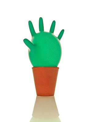 Kaktus - p1298m1134570 von mic