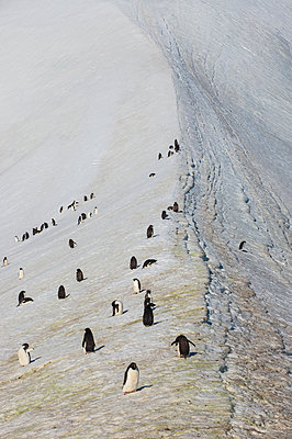 Penguin colony in Hope Bay - p300m2203000 by Michael Runkel