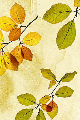 Herbstblätter   - p450m1190903 von Hanka Steidle