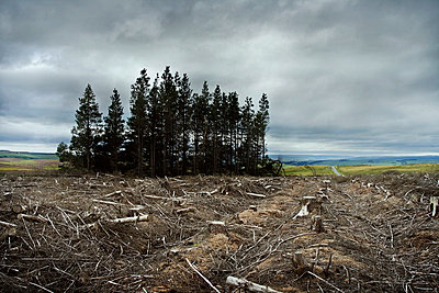 Wide view of deforestation in UK countryside - p1072m829032 by Graeme Ruddick