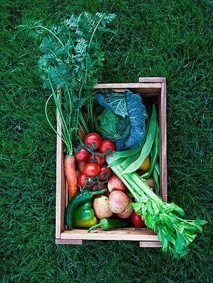 Vegetable Box - p1082m951601 by Daniel Allan