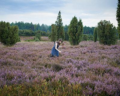 Picking heath - p1124m931797 by Willing-Holtz