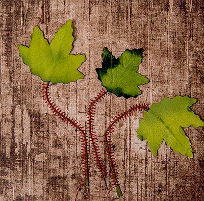 Leaves - p451m2258029 by Anja Weber-Decker