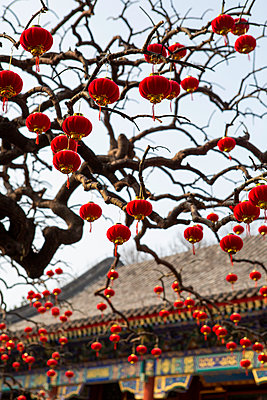 Chinese lanterns in a tree, Beijing - p817m2179106 by Daniel K Schweitzer