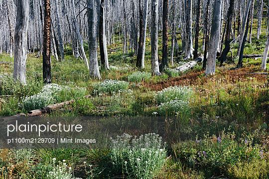 08.10.19 - p1100m2129709 by Mint Images