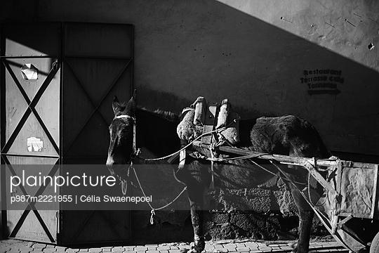 Marrakech03 - p987m2221955 by Célia Swaenepoel