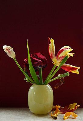 Verwelkte Tulpen - p249m865485 von Ute Mans