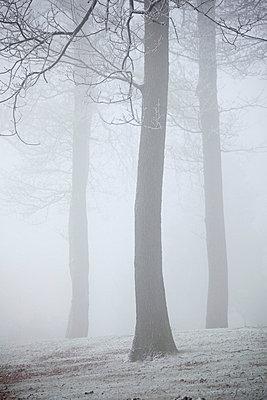 Winter - p5864710 by Kniel Synnatzschke