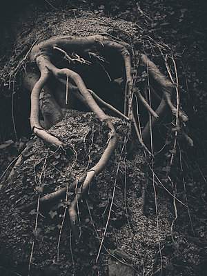 Exposed tree roots and ivy - p1072m829242 by Neville Mountford-Hoare