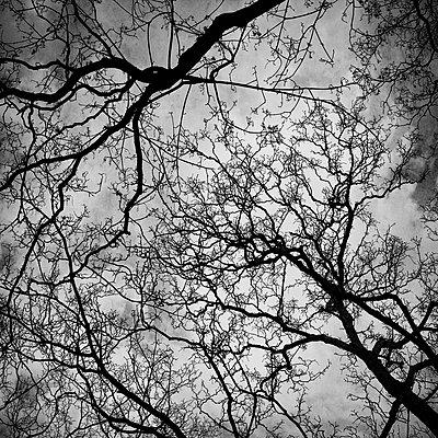 Treetops - p1240m2063331 by Adeline Spengler