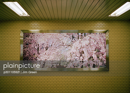 Framed view of cherry trees blossoming in a subway - p30110592f by Jim Green
