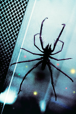 Arachnophobia - p1228m2007776 by Benjamin Harte