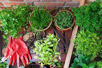 Various potted spice plants on terrace - p300m2080086 by Gaby Wojciech