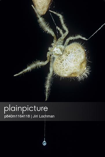 p840m1164118 von Jiri Lochman