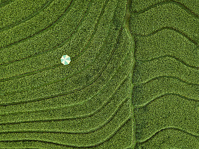 A parasol in a field, aerial view - p1108m2141987 by trubavin