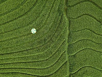Ein Sonnenschirm im Feld, Luftaufnahme - p1108m2141987 von trubavin