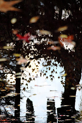 Autumn leaves reflecting on water surface - p1194m1466323 by Julio Calvo