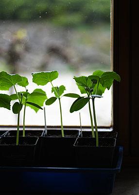 Seedlings - p1229m2273164 by noa-mar
