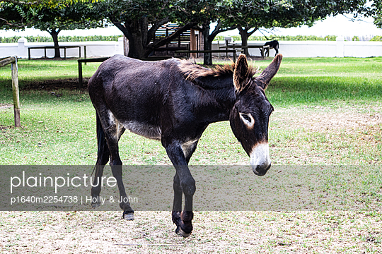Single donkey out at feed - p1640m2254738 by Holly & John