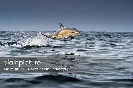 p429m2019735 von George Karbus Photography