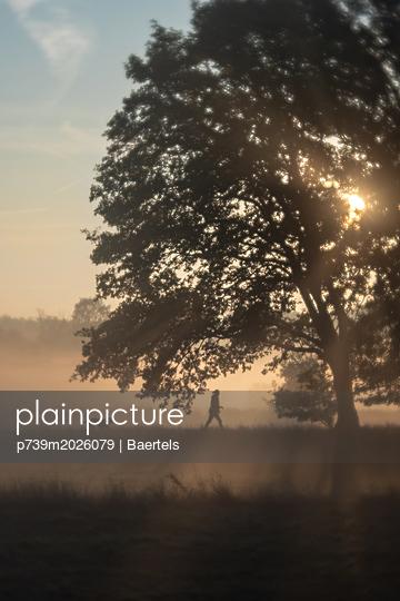 Morning mist - p739m2026079 by Baertels