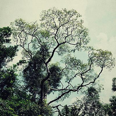 Treetop - p1240m1057461 by Adeline Spengler