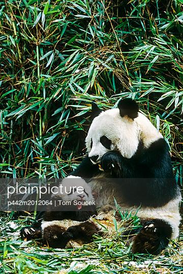 p442m2012064 von Tom Soucek