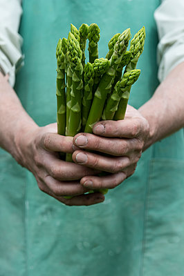 Man holding bundle of organic green asparagus in hands - p300m2024163 von Achim Sass