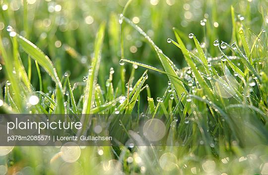 morning dew - p378m2085571 by Lorentz Gullachsen