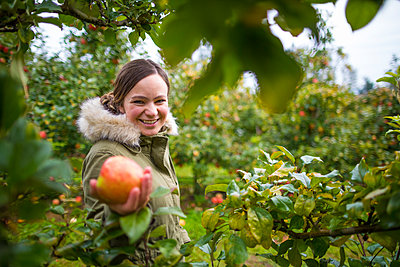 Woman picking apples in orchard, Abbotsford, British Columbia, Canada - p1166m2202102 by Christopher Kimmel / Alpine Edge Photography