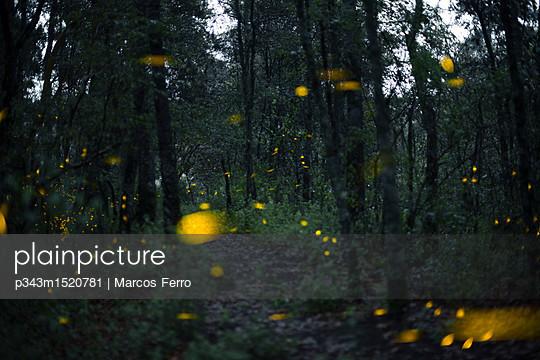 p343m1520781 von Marcos Ferro