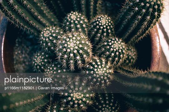 p1166m1182901 von Cavan Images