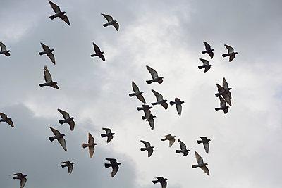 Vogelschwarm - p876m966746 von ganguin