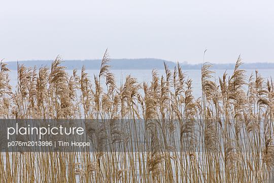 Schilfgras am Ufer - p076m2013996 von Tim Hoppe