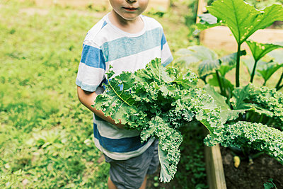 A five year old boy holding a bouquet of fresh picked kale - p1166m2201482 by Cavan Images