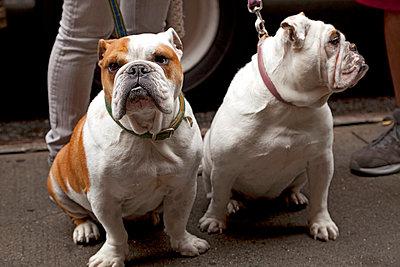 Dogs waiting - p382m763162 by Anna Matzen